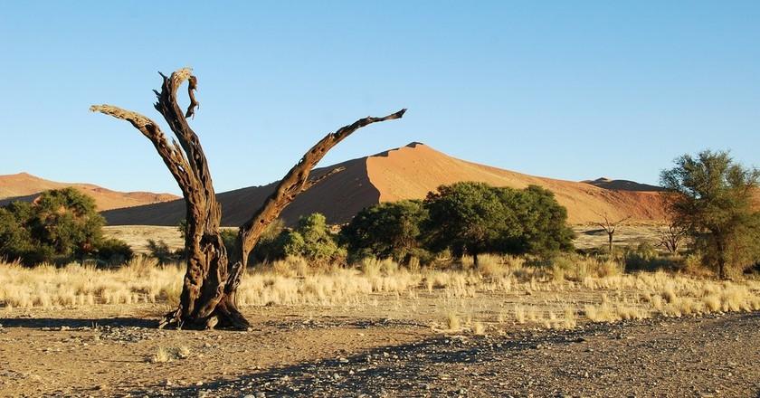 Majestic Namibia   © katja/Pixabay