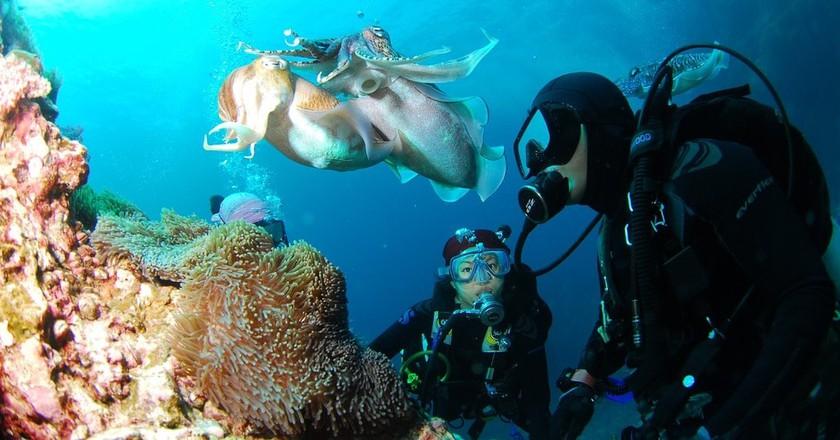 Scuba divers | ©ggungpa0 / Pixabay