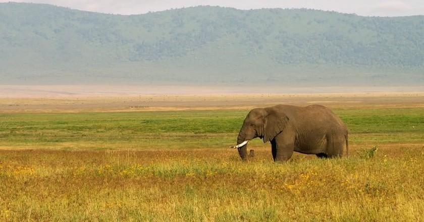 Tanzania | © evaschlomberg/Pixabay