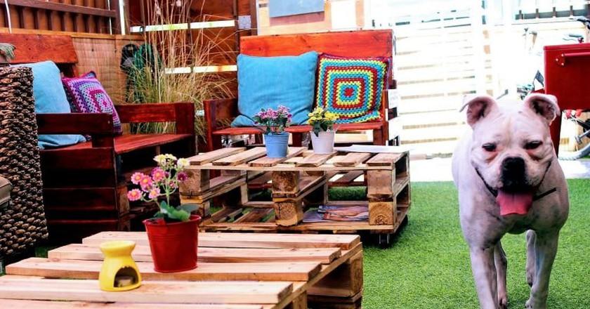 Beautiful Front Patio & Company  Courtesy of Amanda Hostel & Restaurant