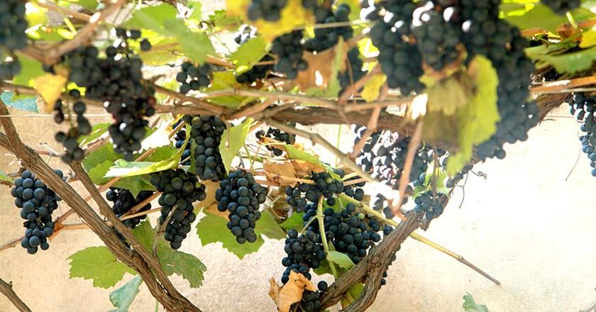Georgian grape   © Paata Vardanashvili /  WikiCommons