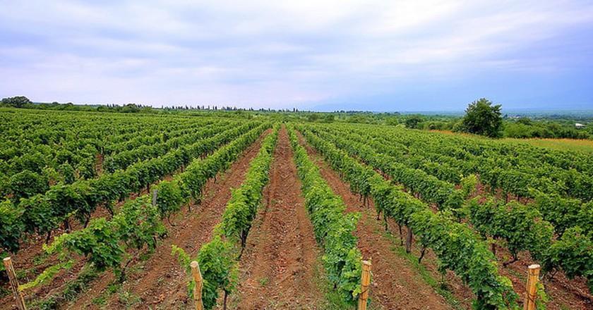 Tatulashvili Family Vineyards | © Chateau Zegaani / Flickr