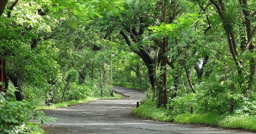 A pathway with a green canopy of trees inside the Sanjay Gandhi National Park in Mumbai | ©AalokMJoshi/Wiki Commons