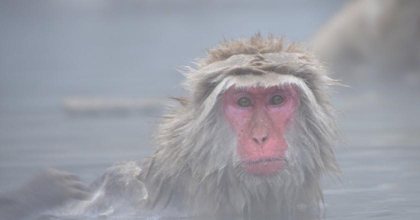 Monkey | © pen_ash/Pixabay