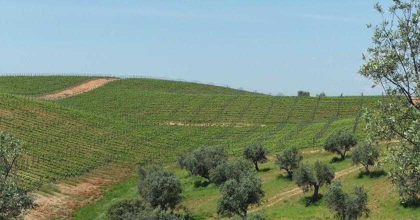 Alentejo vineyard | © PaisJoana / Pixabay