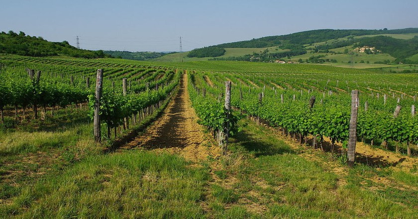 A Wine-Lover's Guide To Hungary's Wine Regions