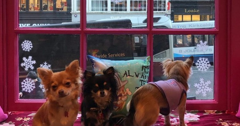 Inside Edinburgh's Chihuahua Café