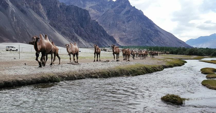 Nubra Valley | © Ashwin Kumar/Flickr