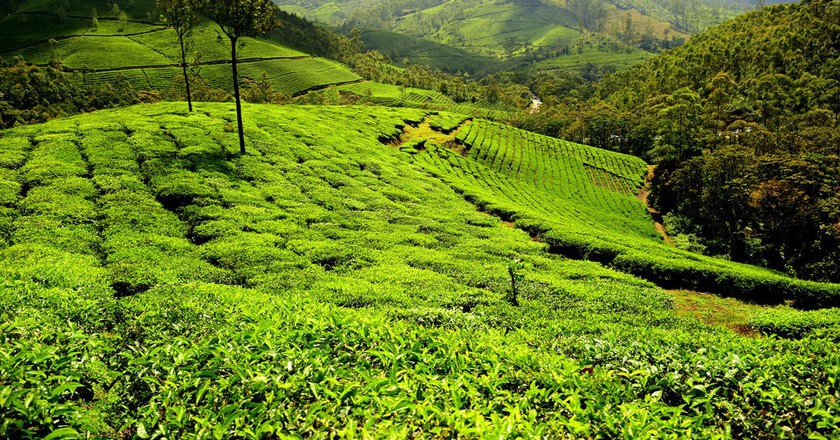 Munnar in Kerala is best-known for its tea plantations  