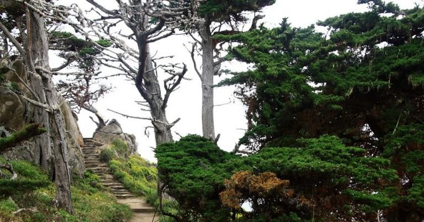 Point Lobos State Reserve - Cypress Grove Trail in the Allen Memorial Grove | © John Menard/Flickr