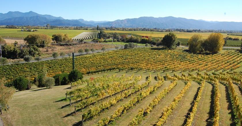 Marlborough vineyards | © unkle_sam/Flickr