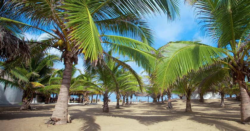 Tropical feelings in Sri Lanka / courtesy of Dolphin Bay Resort