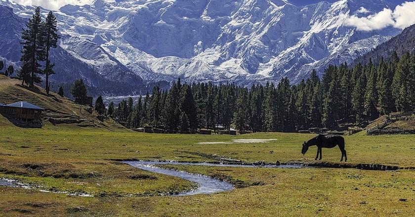 Fairy meadows with the glorious Nanga Parbat Mountain, Pakistan | © Imrankhakwani/WikiCommons