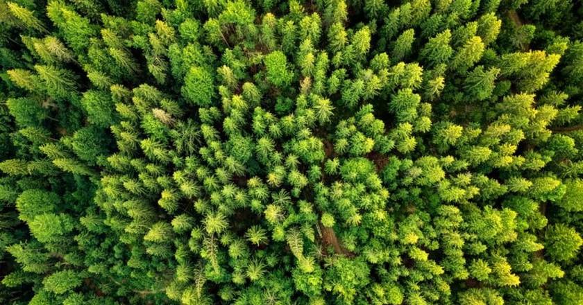 A new perspective of an old forest   © ZullU InFocus/Shutterstock