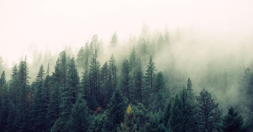 Mist over the trees   © Jay Manri / Unsplash