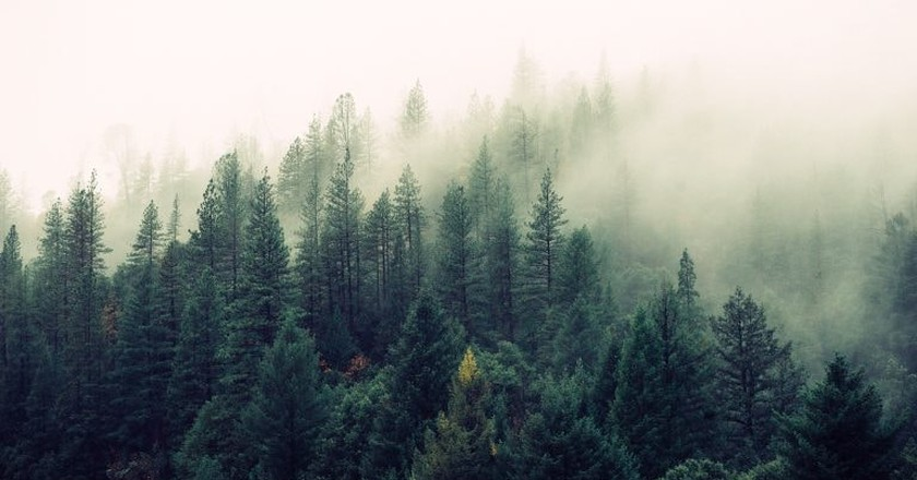 Mist over the trees | © Jay Manri / Unsplash