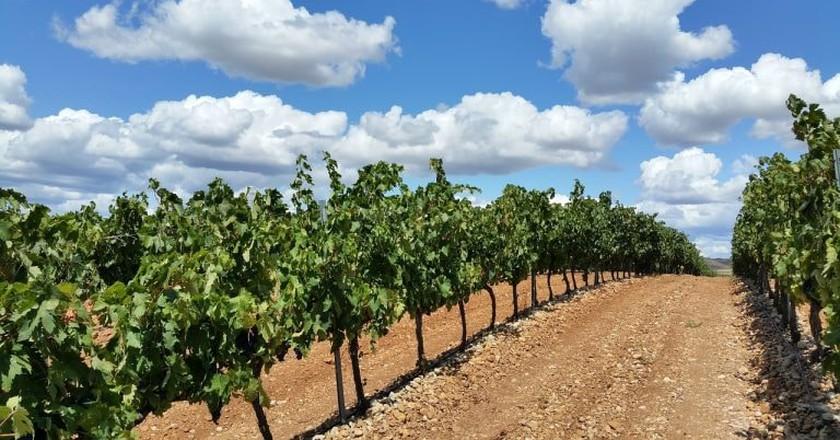 A vineyard in La Rioja, Spain | MaxFreePixel