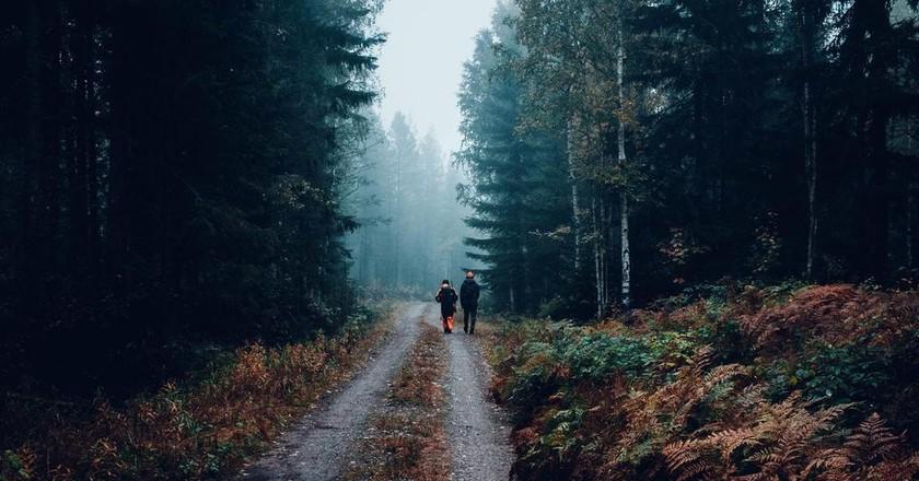 Walking in a Finnish forest | © Fredrik Ohlander / Unsplash