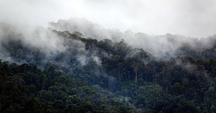 Mist hanging over the Ranomafana National Park rainforest | ©  Vaughn Lewis/Culture Trip