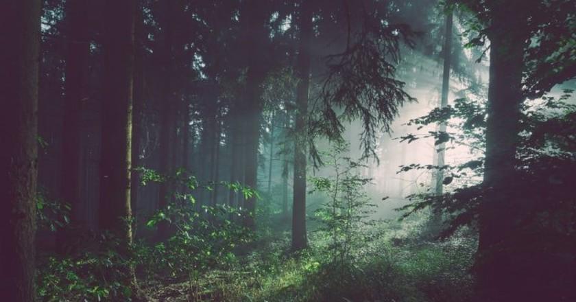 Mist in the forest | © Sebastian Unrau/Unsplash