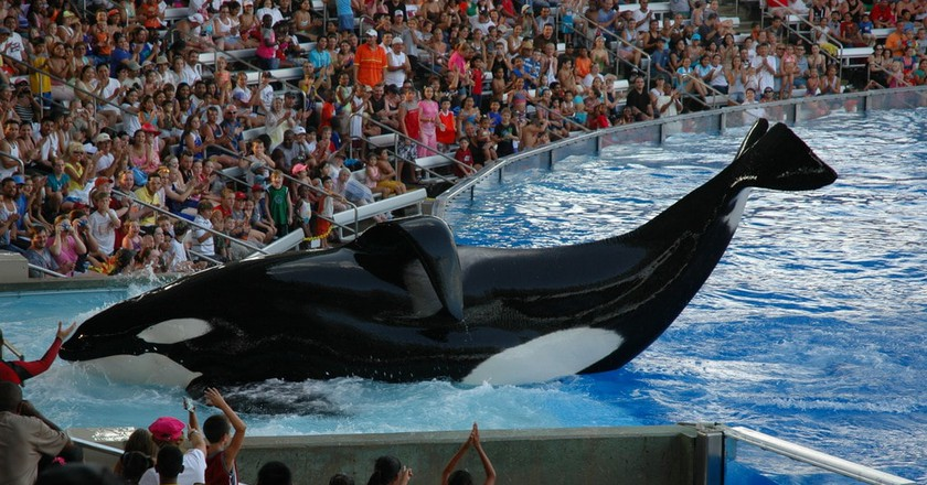 Shamu show at SeaWorld Orlando | © Jasonshortes / WikiCommons