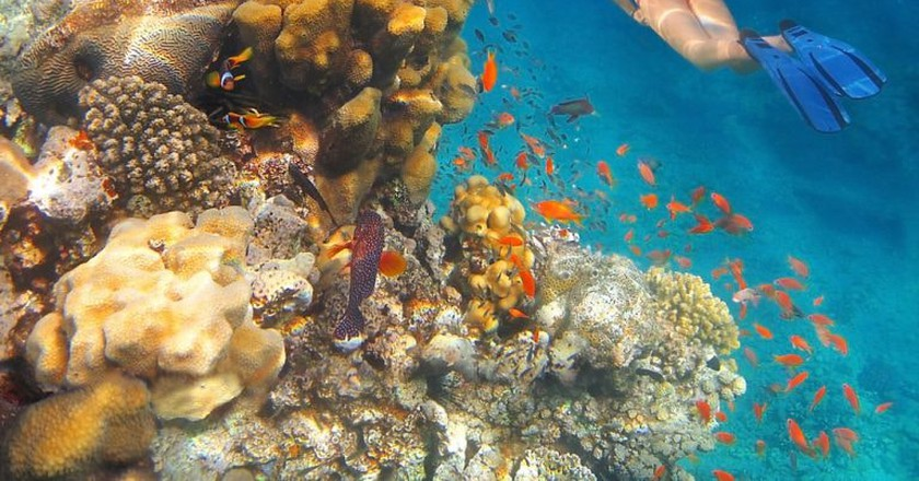 A girl swims underwater amid the beautiful coral and colourful tropical fish in the Red Sea, Eilat, Israel   © irisphoto1 / Shutterstock