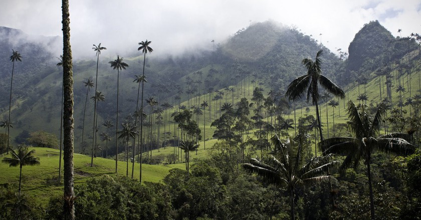 What to Know Before Visiting The Valle de Cocora, Colombia