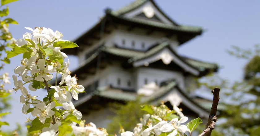 Apple blossoms at Hirosaki Castle; the prefecture is famous for its apple production | © Foooomio / Flickr