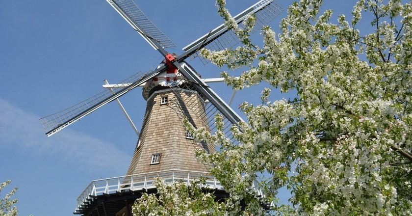 De Zwaan Windmill   © erikccooper / Flickr