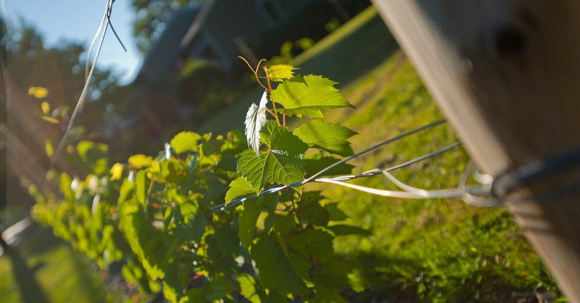 Maine's Best Wineries and Wine Explained