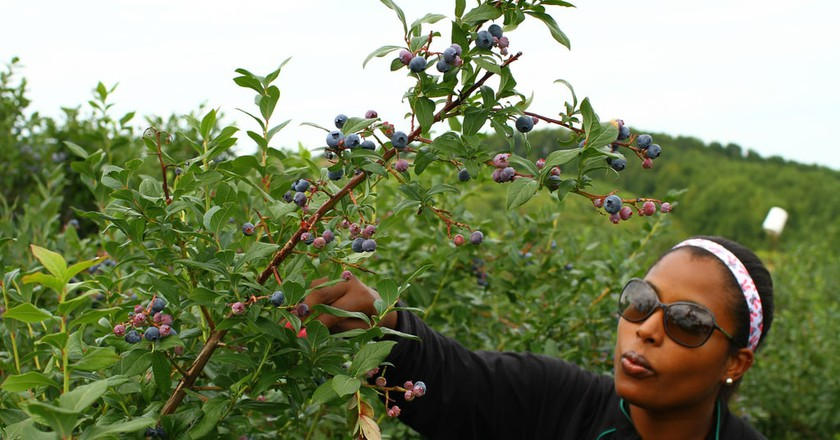 Picking blueberries | © Chris Waits / Flickr