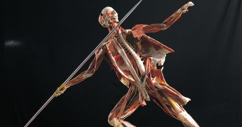 Body Worlds RX | Courtesy of Body Worlds RX