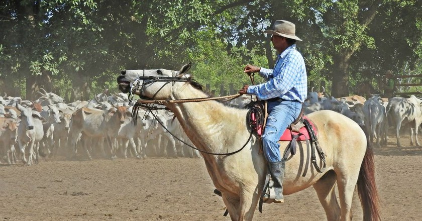 A real Colombian cowboy in the Llanos | © Chris Bell / Culture Trip