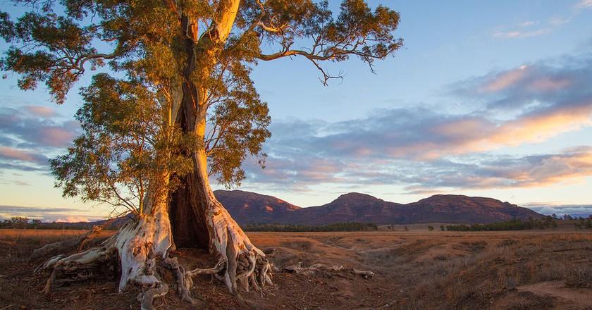 Ikara-Flinders Ranges National Park   © Jacqui Barker/Wikimedia Commons