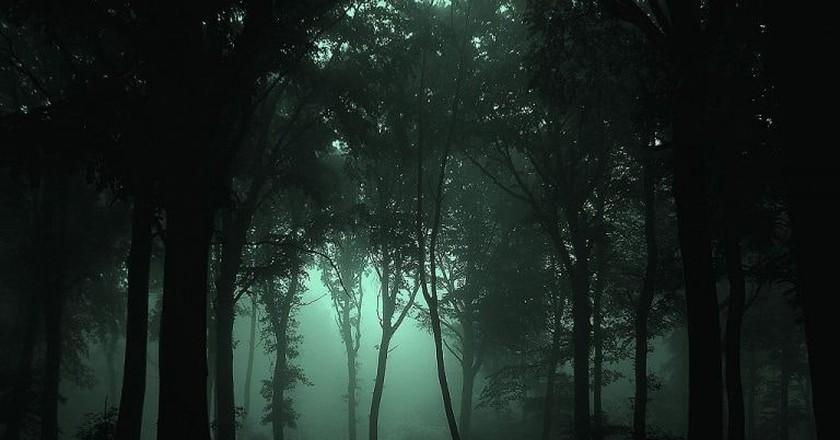 Woods at night | © JovanCormac / WikiCommons