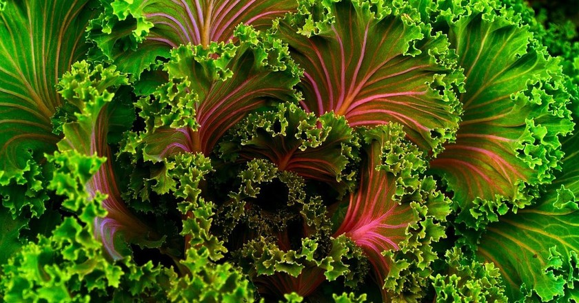 Beautiful green and pink curly kale | © Pixabay/Free Photos