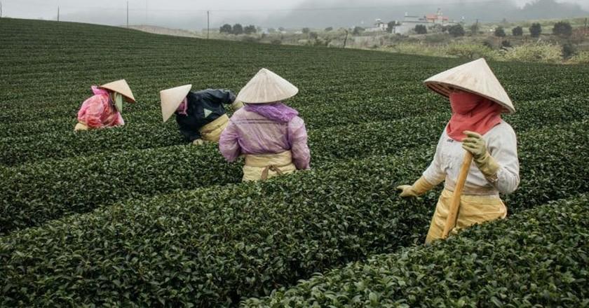A day at the Moc Chau Tea Plantations  