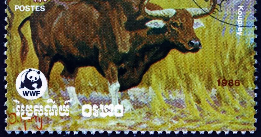 A 1986 stamp shows the kouprey   © Boris15/Shutterstock