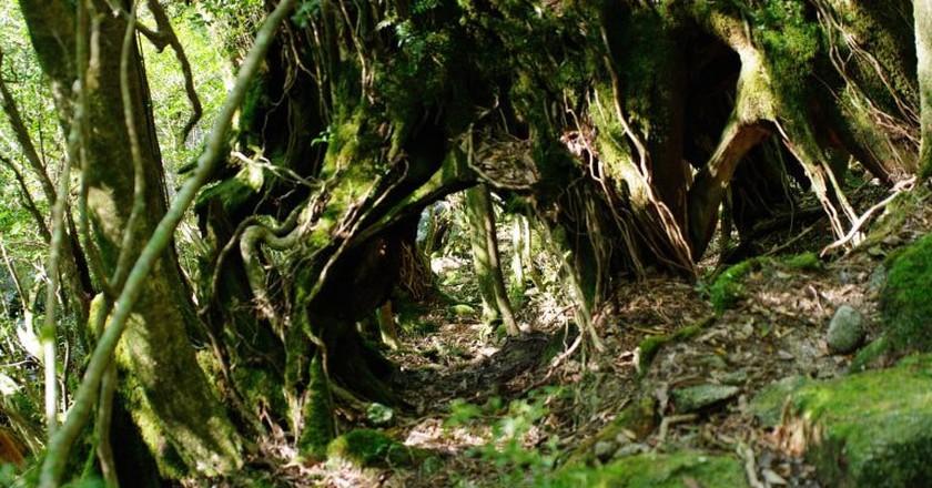 7 Must-See Sights in Yakushima, Japan's Most Beautiful Island