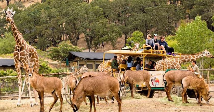 Visitors and animals at Safari West wildlife preserve in Santa Rosa, CA