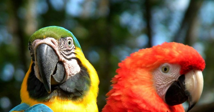 Examples of Colombia's remarkable biodiversity | Chris Bell / © Culture Trip
