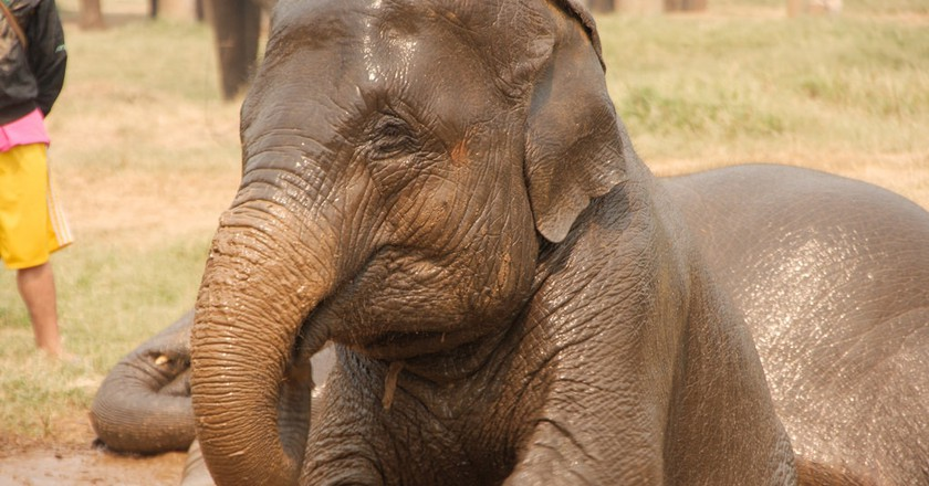 Young elephant at an ethical sanctuary in Thailand | © PROChristian Haugen / Flickr