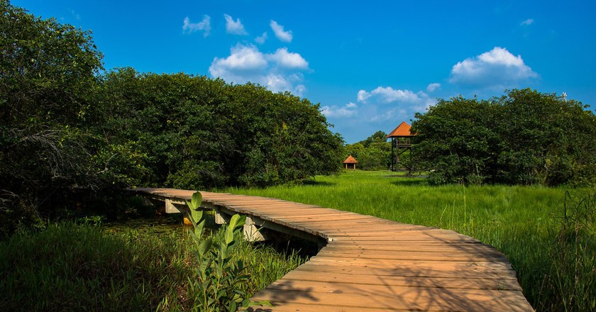 Walking paths in Beddagana Wetland Park