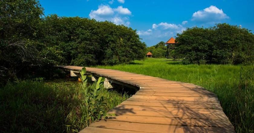 Walking paths in Beddagana Wetland Park