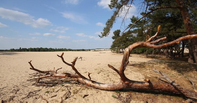 De Loonse en Drunense Duinen National Park in the Netherlands