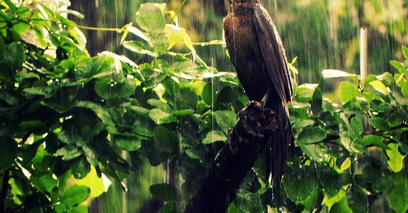 A bird in the rain in Yucatán state