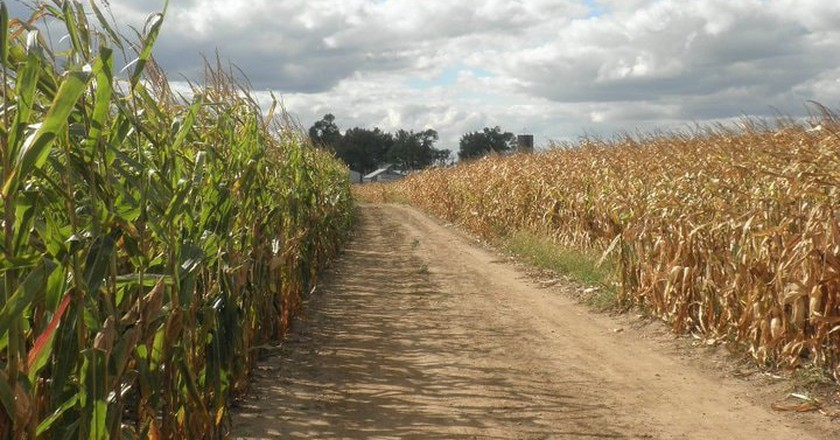 View of the Konow Corn Maze in Homer Glen, IL