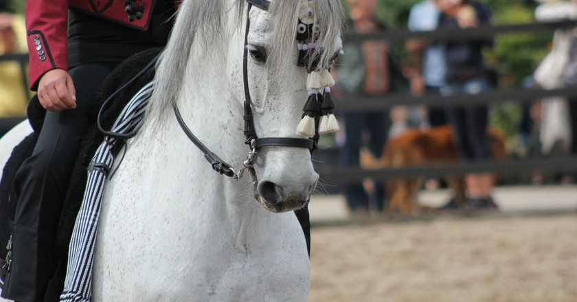 Madrid horse week takes place in November