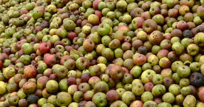 Apples ready for production in Normandy