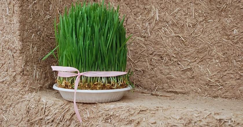 Grass for Nowruz